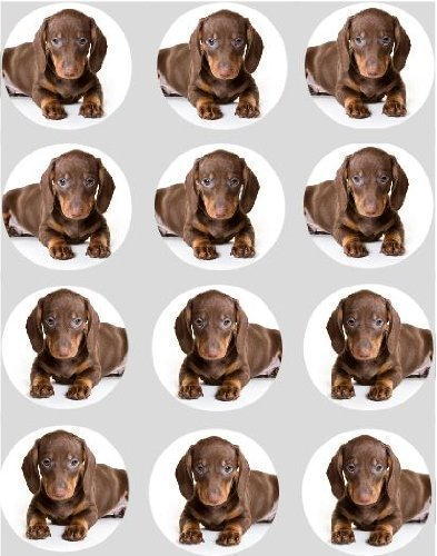 12 Dachshound hunde design reispapier fee / cup cake 40mm toppers vorgestanzt dekoration Hund Cup