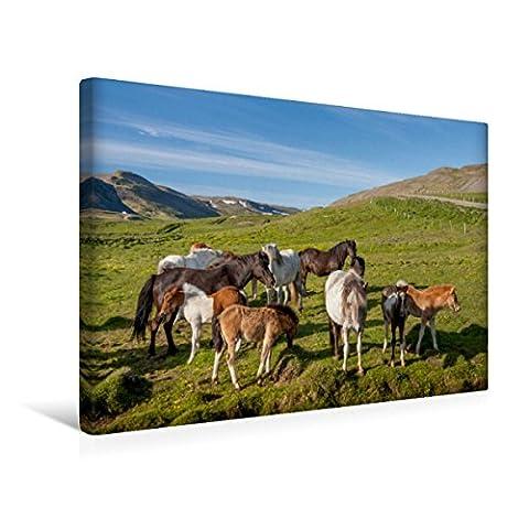 Premium Textil-Leinwand 45 x 30 cm Quer-Format Islandpferde: Gefährten der Wikinger | Wandbild, HD-Bild auf Keilrahmen, Fertigbild auf hochwertigem Vlies, Leinwanddruck von Norman Preißler