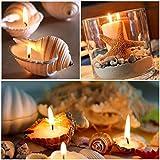BELLE VOUS 130 Deko Muscheln - Haus Dekoration, Echte Seesterne Muscheln zum Basteln und Meeresschnecken, für Kerzenherstellung, Strand Motto-Party, Aquarium und Maritime Hochzeits-Deko - 3