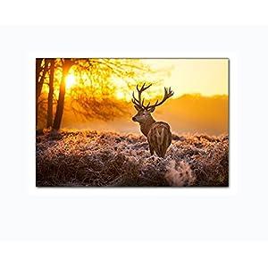 Leinwandbild Hirsch Im Wald Bei Sonnenuntergang Wandbild Auf Keilrahmen.  Beste Qualität Aus Deutschland! Handgefertigt