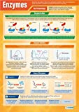 Enzymes |Science Educational Chart/Poster in laminated paper (A1 850mm x 594mm)