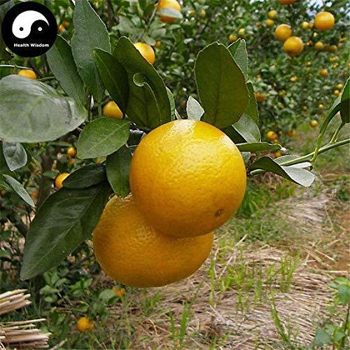 PLAT FIRM Germinación de las semillas: 50pcs: Semillas Comprar Gong Naranja brote fruto de Citrus...