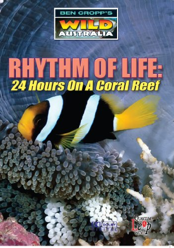 0cc9e4f82db Rhythm Of Life - 24 Hours On A Coral Reef  DVD   Edizione