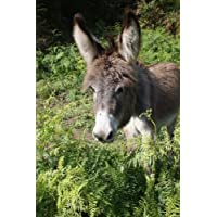 Look at the Sweet Little Donkey Portrait Animal Lined Journal
