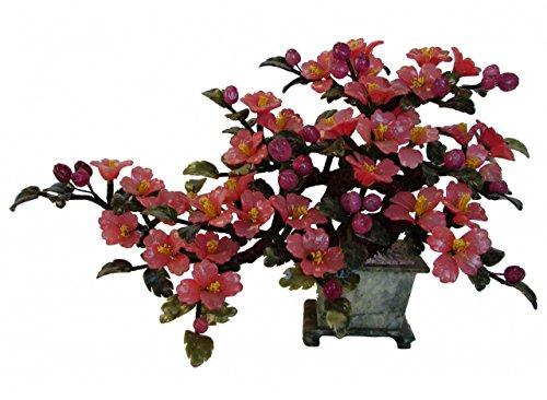Giada Rossa Albero Fiore di
