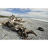 Forex 120 x 80 cm: Driftwood, Gillespies Beach, Westland Tai Poutini National Park, UNESCO World Heritage Site, West Co de Jochen Schlenker / Robert Harding