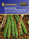 Buschbohne Brown Dutch
