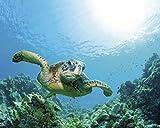 1art1 55158 Unterwasserwelt - Meeres-Schildkröte Über Sonnendurchflutetem Korallenriff Poster Kunstdruck 50 x 40 cm