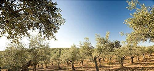 Oliven-Wellness-Set – Hautpflegeserie von La Chinata - 2