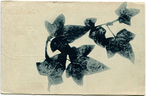 1922-foglie-dedera-dest-sant-angelo-lodigiano-lodi-fp-b-n-vg-cartolina-postale