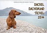 DACKEL DACHSHUND TECKEL 2014 (Wandkalender 2014 DIN A3 quer): Mit dem Dackel durch's Jahr (Monatskalender, 14 Seiten)