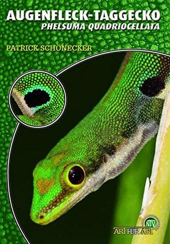 Der Augenfleck-Taggecko: Phelsuma quadriocellata - Taggecko