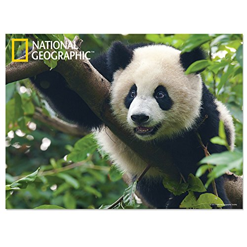 National Geographic NG28509 - Póster de Panda Gigante en 3D para niños