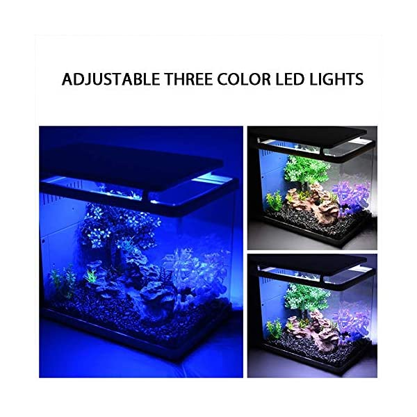 WSJTT 19L LED Glass Aquarium Kit for Starters with 5W Power Filter Pump 3.2W Colored led Light Wide View Curved Shape…