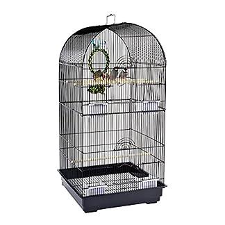 rainforest caracus cage Rainforest Caracus Cage 51gbQ5BCjPL