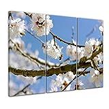 Bilderdepot24 Kunstdruck - Frühling - Bild auf Leinwand - 150 x 90 cm 3tlg - Leinwandbilder - Bilder als Leinwanddruck - Wandbild Pflanzen & Blumen - Jahreszeiten - Apfelblüten