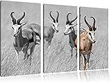 Animali della savana, cervi, immagine Africa bianco 3 pezzi foto in bianco / tela 120x80 in su tela, XXL enormi immagini completamente Pagina con la barella, stampa d'arte sul murale con telaio, più economico di pittura o un dipinto a olio, non un manifesto o un banner,