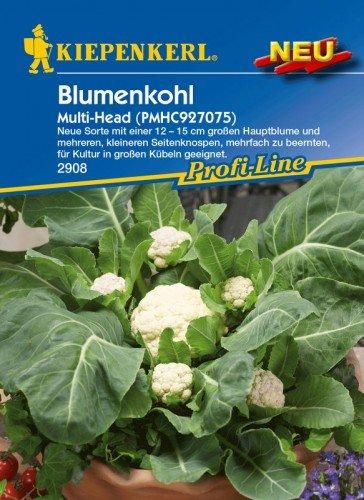 Blumenkohl Multi-Head F1