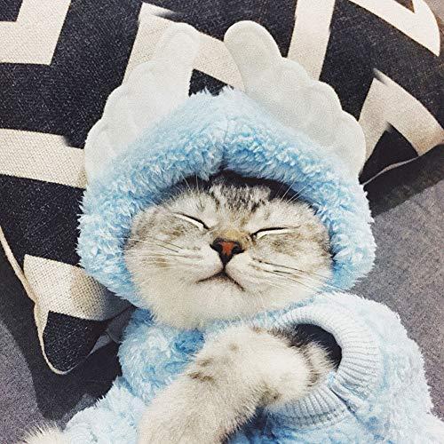 Kostüm Katze Kaninchen - zhixing Katze Hund Himmelblau Engel Anzug Halloween Cosplay Kostüme Outfit Für Kleine Mittlere Große Andere Haustiere Kaninchen Pudel Bulldogge Pommerschen Corgi Kostüm