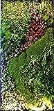 Sistema di parete verde, sistema modulare di giardino verticale per casa, ufficio, area commerciale, decorazione interna, piante non incluse