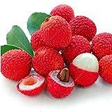 Ncient 5 pcs/ Sac Graines Semences de Fruit Litchi, Fruitiers Seed Plantes Lychee Graines à Planter