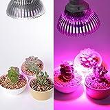 Bombilla de bulbo Xcellent Global de 12 LEDs para crecimeinto de plantas -12W E27(3 azules y 9 rojos) Lámpara hidropónica para interior vegetal para crecimiento de plantas y flores en invernadero 85-265V LD051