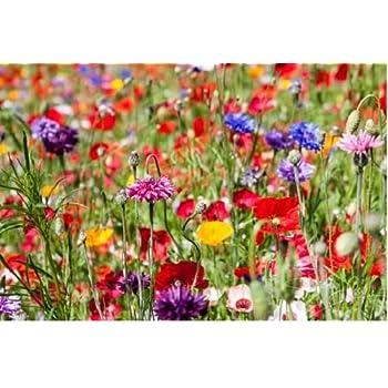 1kg WILD FLOWER SEEDS MEADOW MIX GRASS PREMIUM mix 1 kg Mix 24