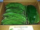 #9: Soursop Leaves - Green - 150 Nos   Graviola   Hanuman phal   Laxman Phal   Mullu Chitta