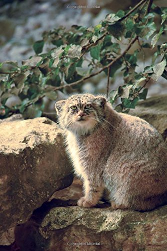 Manul Pallas's Cat (Otocolobus manul) Small Wild Cat Journal: 150 Page Lined Notebook/Diary