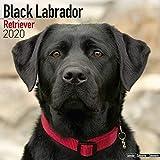 Black Labrador Retriever Calendar 2020
