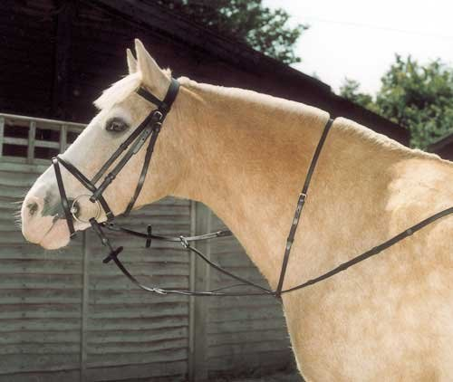 Windsor Equestrian Running Martingale Zaumzeug schwarz schwarz Cob