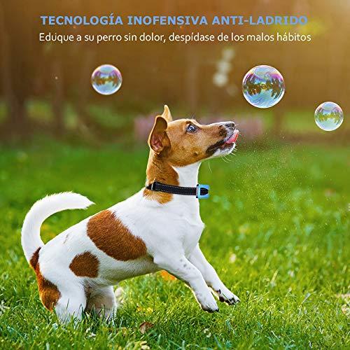 Collar Adiestramiento 7 Niveles Sonido y Vibraci/ón Sensibilidad Impermeable IP65 A+ Trainer Collar Antiladridos para Perros Correa Ajustable Nylon para Perro