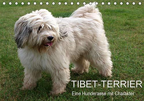 Tibet-Terrier - Eine Hunderasse mit Charakter (Tischkalender 2020 DIN A5 quer): Der Tibet-Terrier ist eine liebenswerte, lebhafte, freundliche und ... (Monatskalender, 14 Seiten ) (CALVENDO Tiere) -