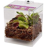 FloraAtHome - Sumpfpflanzen - Terrarium, Venusfliegenfalle - Dionaea muscipula