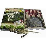 Squelette de Dinosaure Ceratosaurus Kit de Fouille Jeu Archéologie Jouet