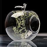 Bargain World Forma de la manzana cristal flor florero musgo botella eco micro paisaje