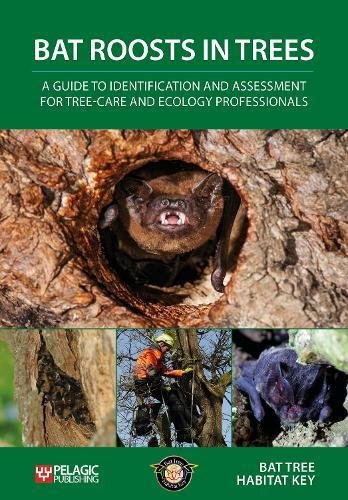 Bat Roosts Trees: Guide Identification