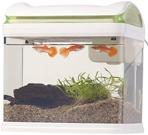 Sweetypet Aquarium: Transport-Fischbecken mit Filter, LED-Beleuchtung und USB, 3,3 Liter (Aquarium-Set) - 3