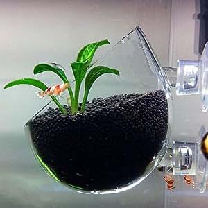 Plant Glass Pot - Aquarium Deko Glasvase für Pflanzen
