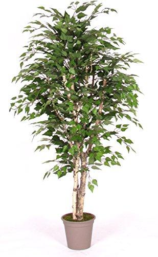 Birke Birch–Baum-Möbel Innenraum mit echten Baumstämme–Hoch 175cm