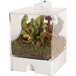 Swampworld Terrarium - 2-farbige Beleuchtung - 3 Fleischfressende Pflanzen