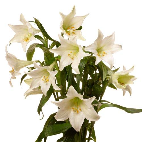 Der Renner - Blumenversand 3008