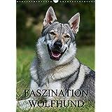 Faszination Wolfhund (Wandkalender 2017 DIN A3 hoch): Tschechoslowakische Wolfhunde auf 13 Kalenderblättern (Monatskalender, 14 Seiten ) (CALVENDO Tiere)