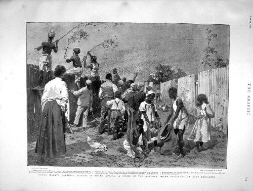 Original old antique victorian print 1901 Malaien, die Heuschrecken Afrika Port Elizabeth Fangen - Afrika Antique Print