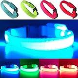 EXPERSOL LED Hundehalsband, superhell, batteriebetrieben, erhöhte Sichtbarkeit und Sicherheit, 4 Farben und 3 Größen (Blau, X-S)