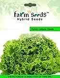 Best Lettuces - FARM SEEDS Hybrid Lettuce Grandrapid 1 packet seeds Review