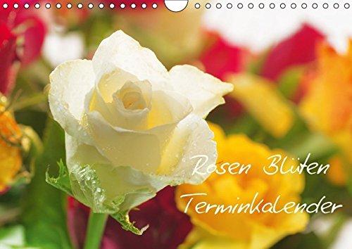 Rosen Blüten Terminkalender (Wandkalender 2018 DIN A4 quer): Ein Terminkalender in dem die Schönheit und die Vielfältigkeit der Rosen zu sehen ist ... [Kalender] [Apr 01, 2017] Riedel, Tanja