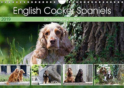 English Cocker Spaniels - Ein Spaziergang im Park (Wandkalender 2019 DIN A4 quer): English Cocker Spaniel im Park auf der Mathildenhöhe (Monatskalender, 14 Seiten ) (CALVENDO Tiere) -