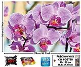 Papel pintado fotográfico Orquídeas - imagen mural floral de orquídeas - decoración mural XXL con bellas flores by GREAT ART (210 x 140 cm)
