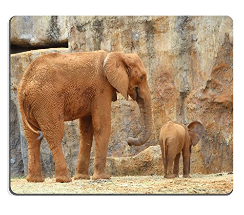 Luxlady Gaming Mousepad Image ID: 34434617elefante africano in the Zoo - Zoo Africano